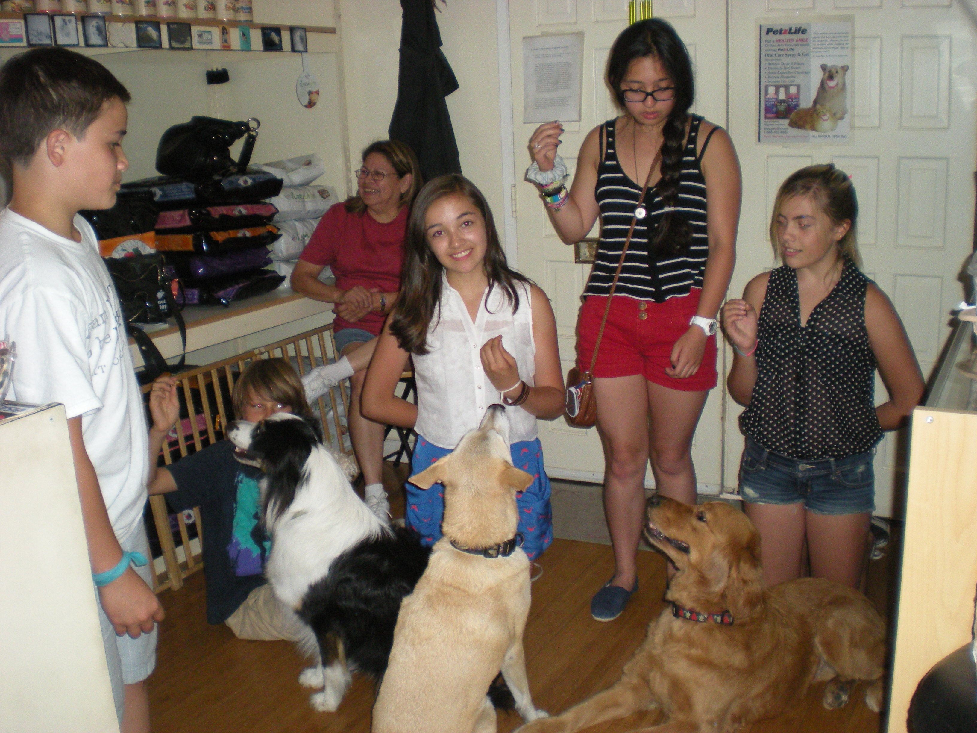 Scent Work Training With Dogs Bristol